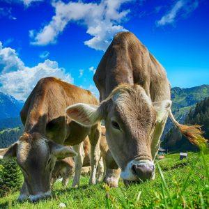 secteur_agricole